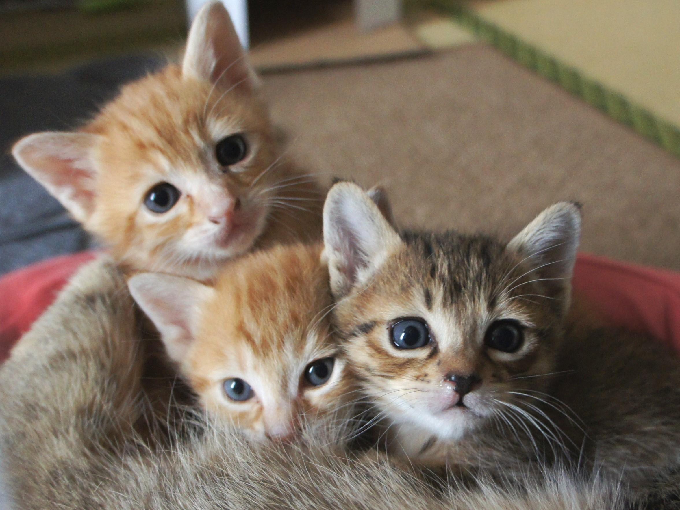 ノラ猫の保護にはいくらかかる?(ワクチン接種と避妊・去勢手術費用編)