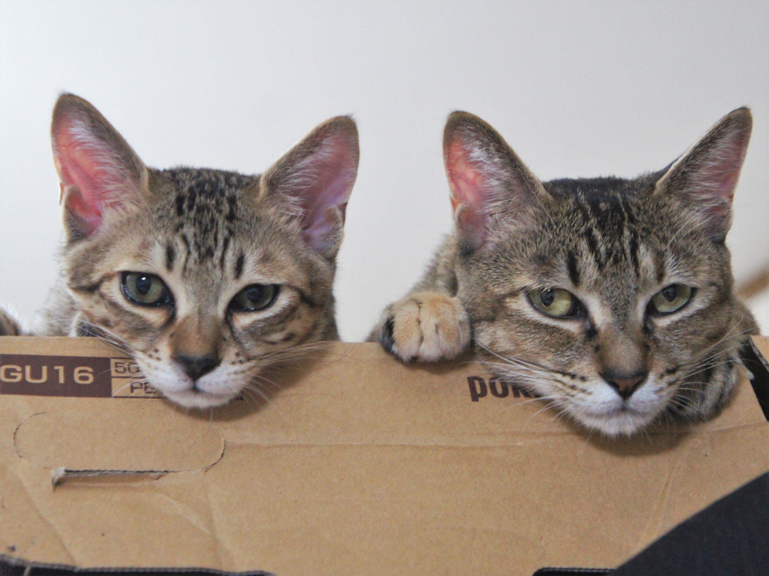 猫と長距離の引っ越しをするには
