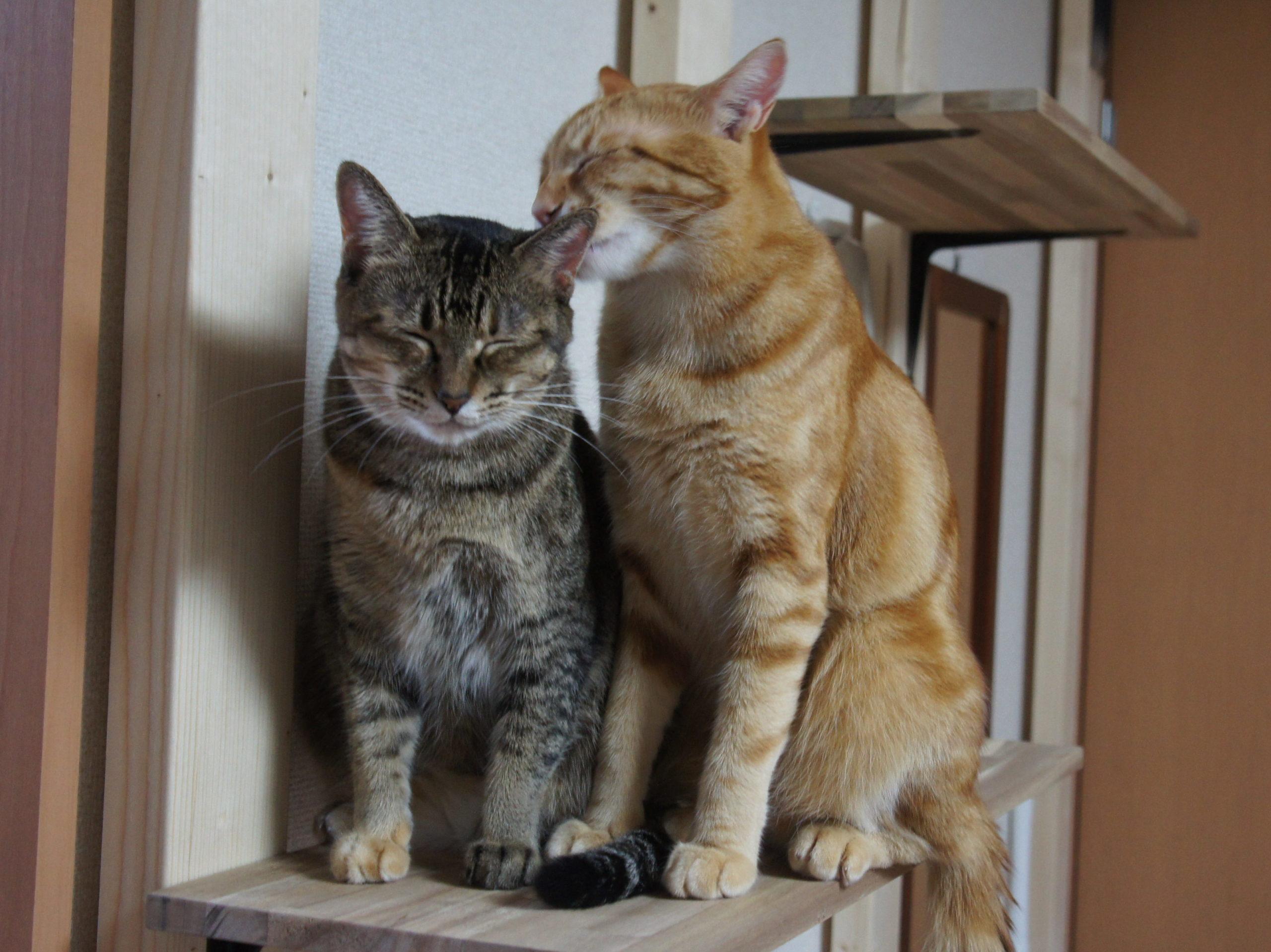 猫は薄情か否か