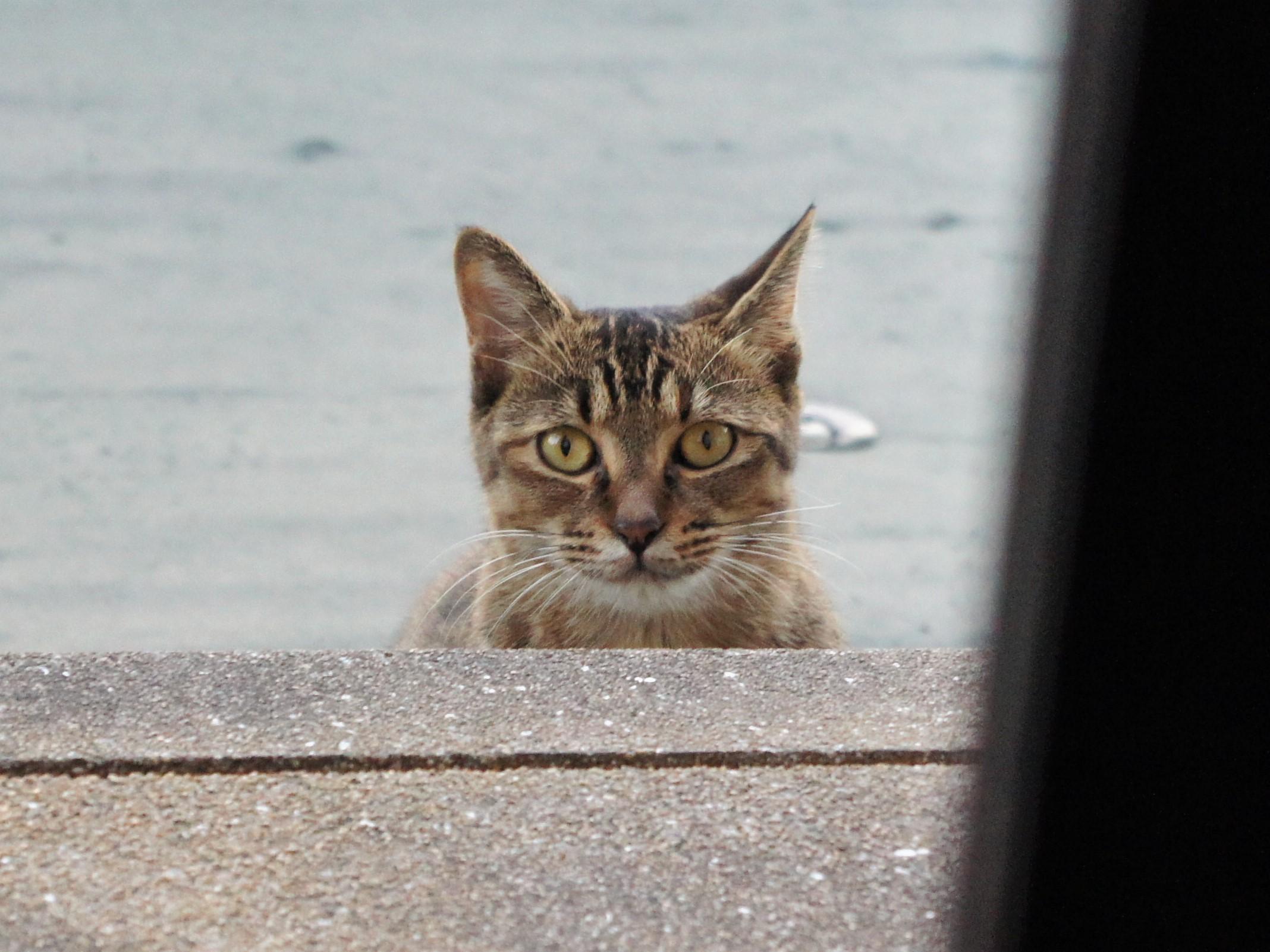 ノラ猫の保護は苦労する?