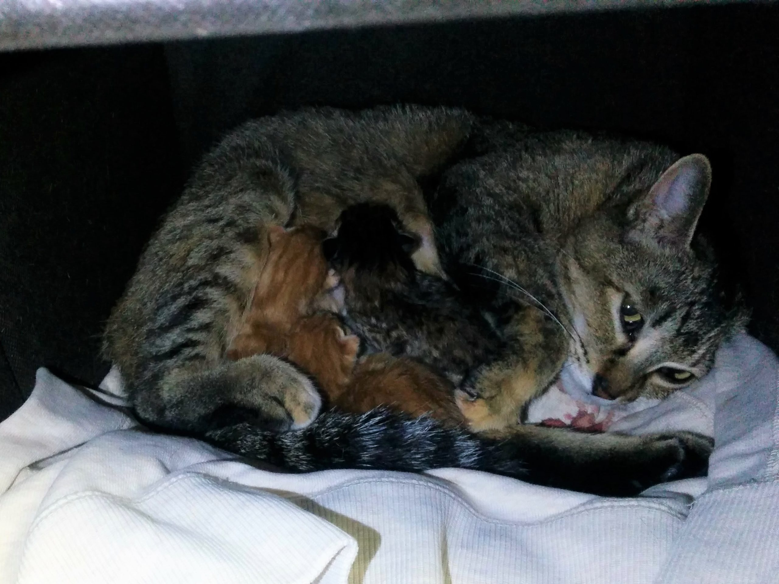 保護猫、初めてのトイレ、そして出産