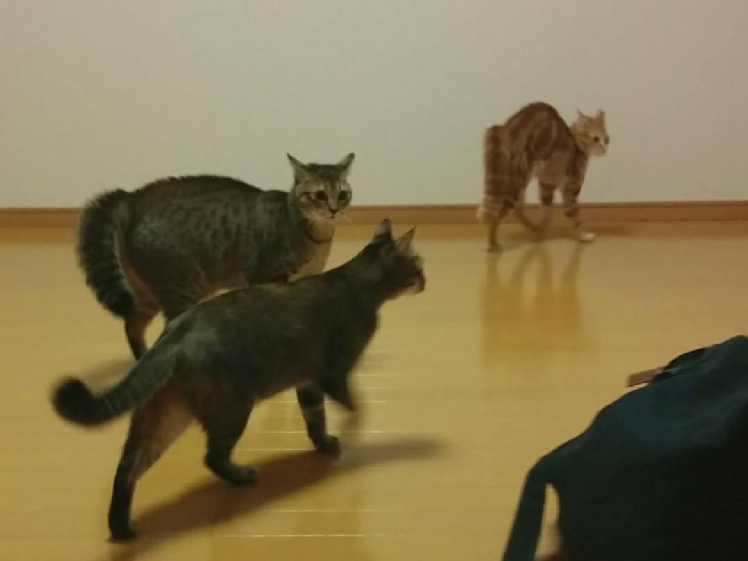 猫4匹と車で引っ越し、その距離1200km!(移動編)