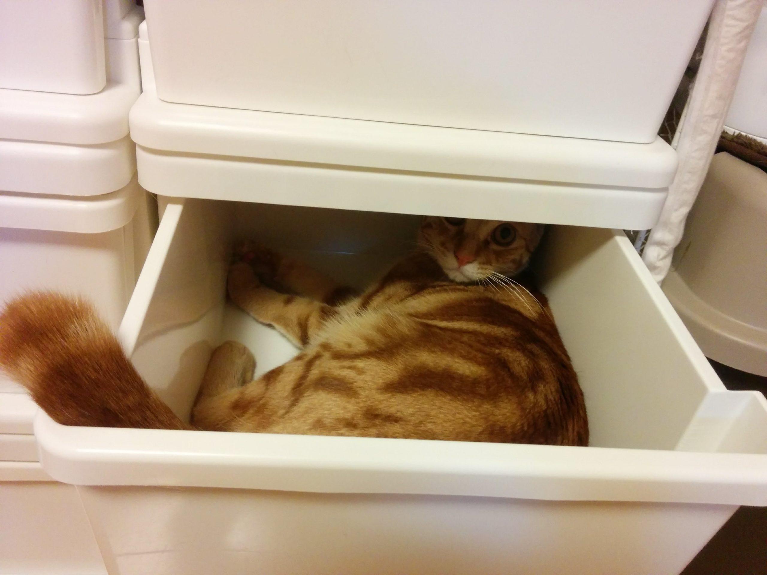 猫のいたずら防止策