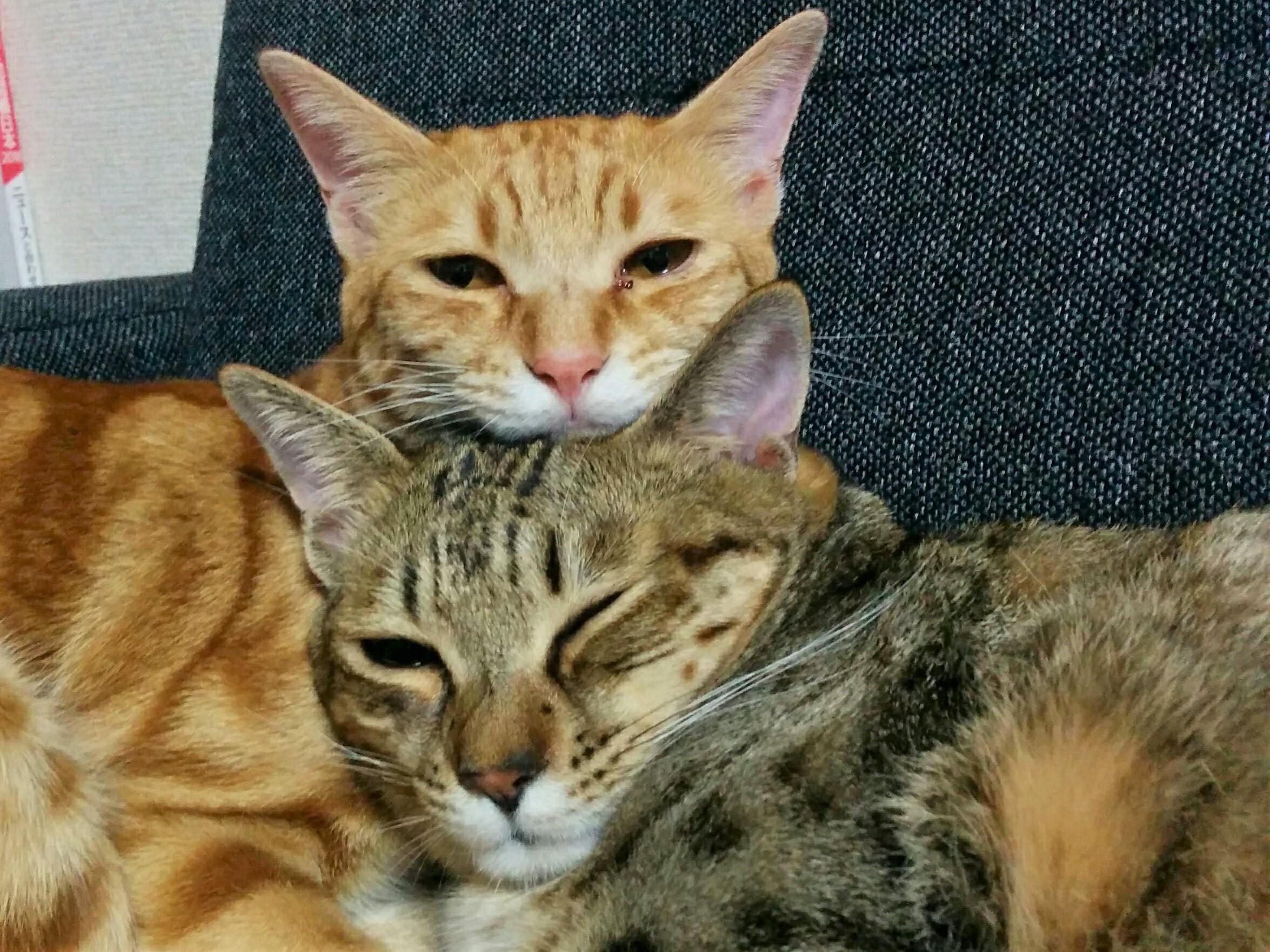 留守中、猫たちは何してる?
