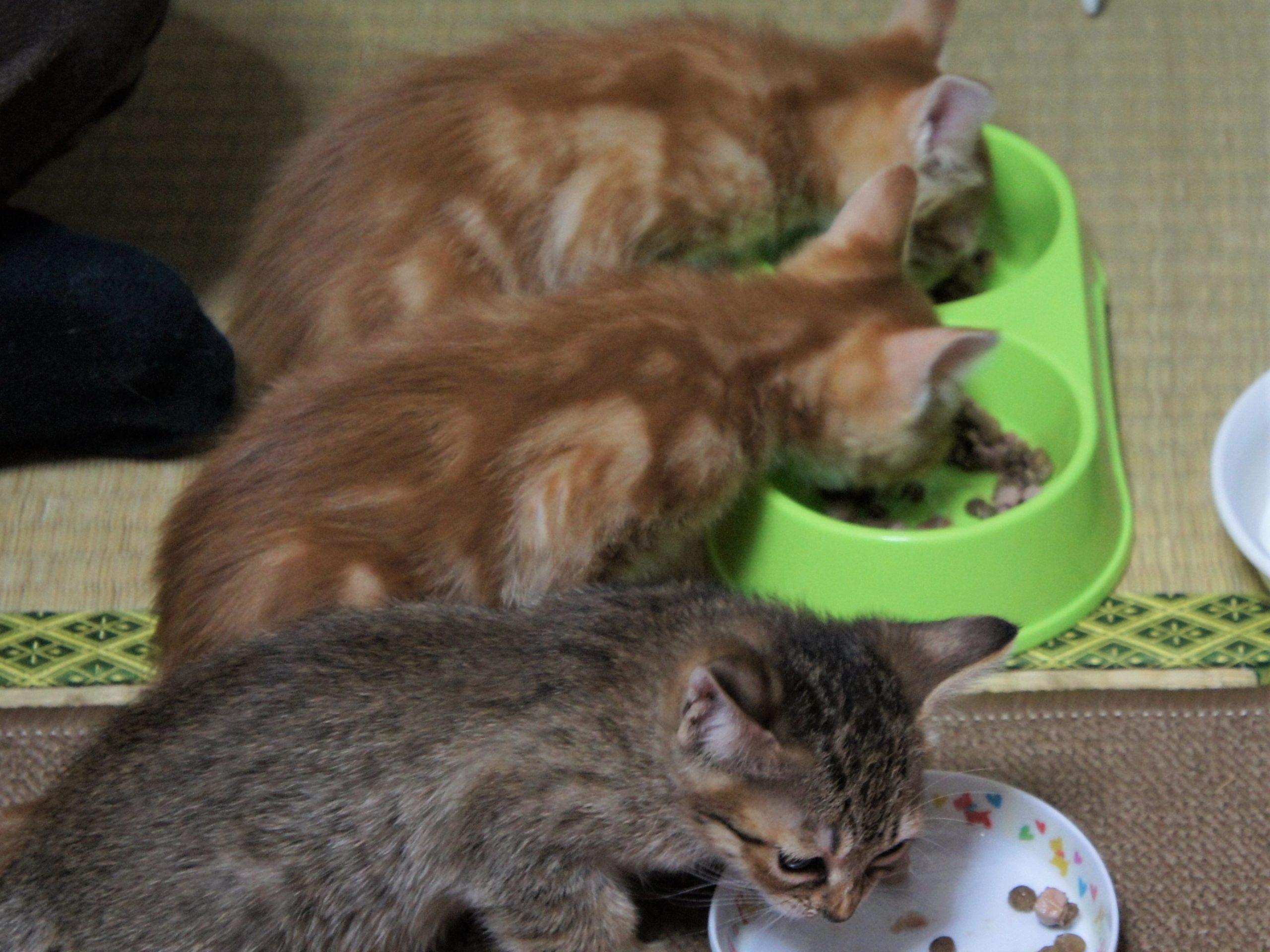 お気に入りの猫食器たち