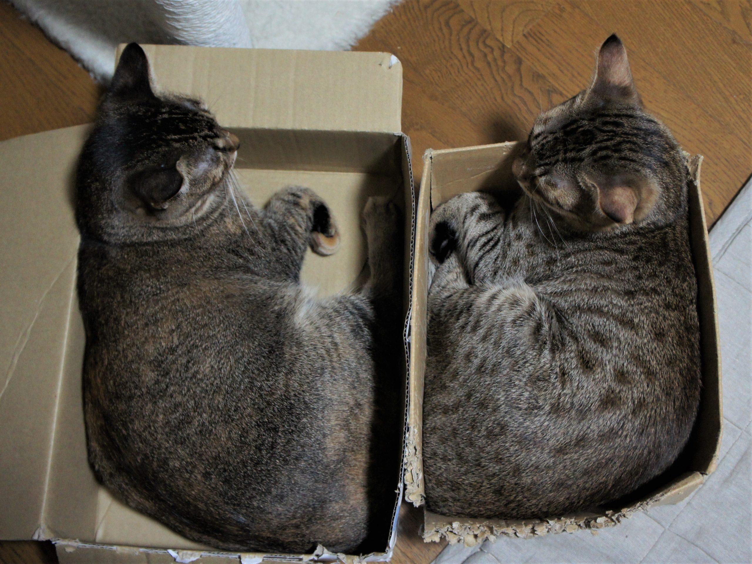 箱入り猫たちの好きな箱