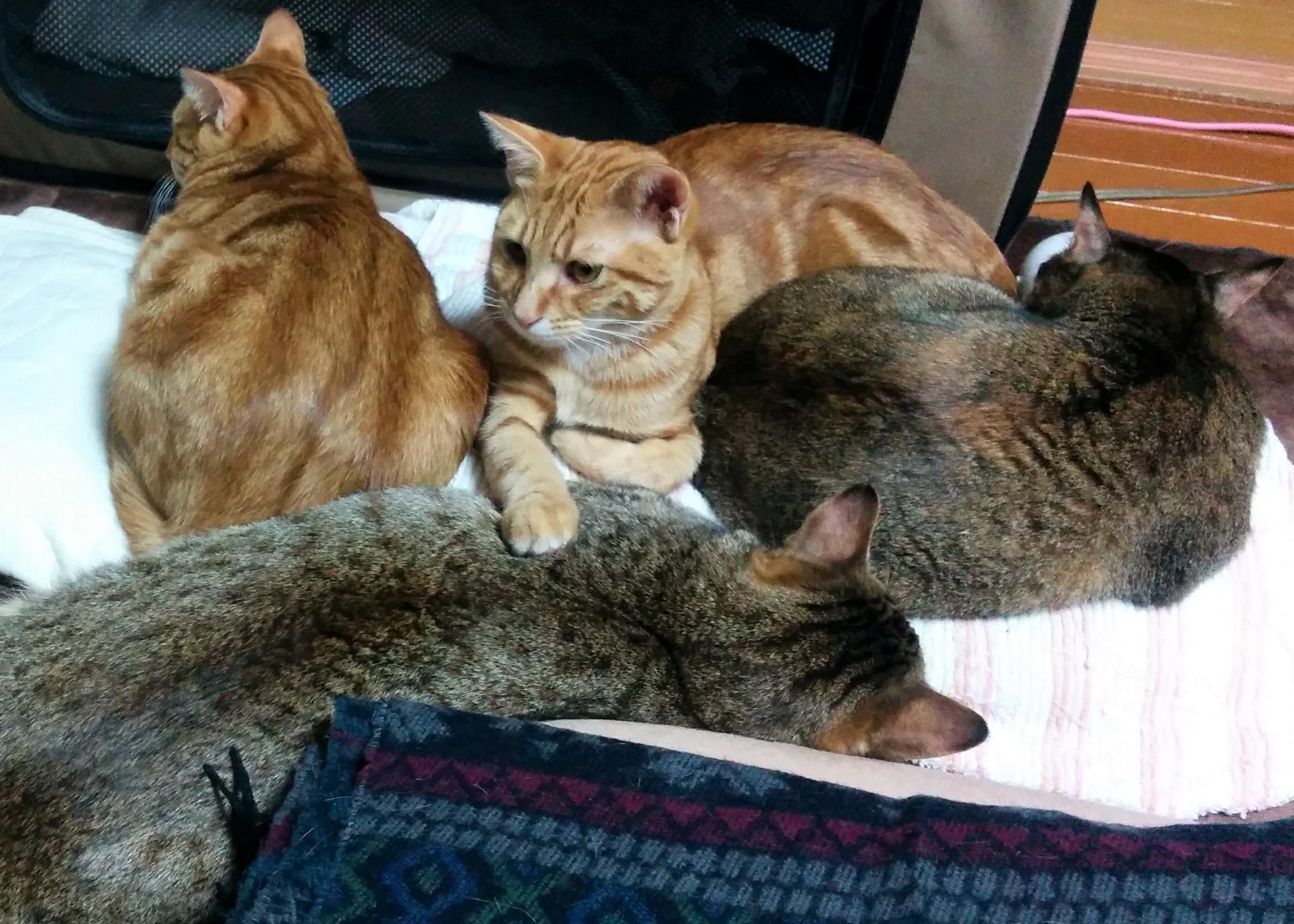 猫たちと離れて別室で寝る大作戦!