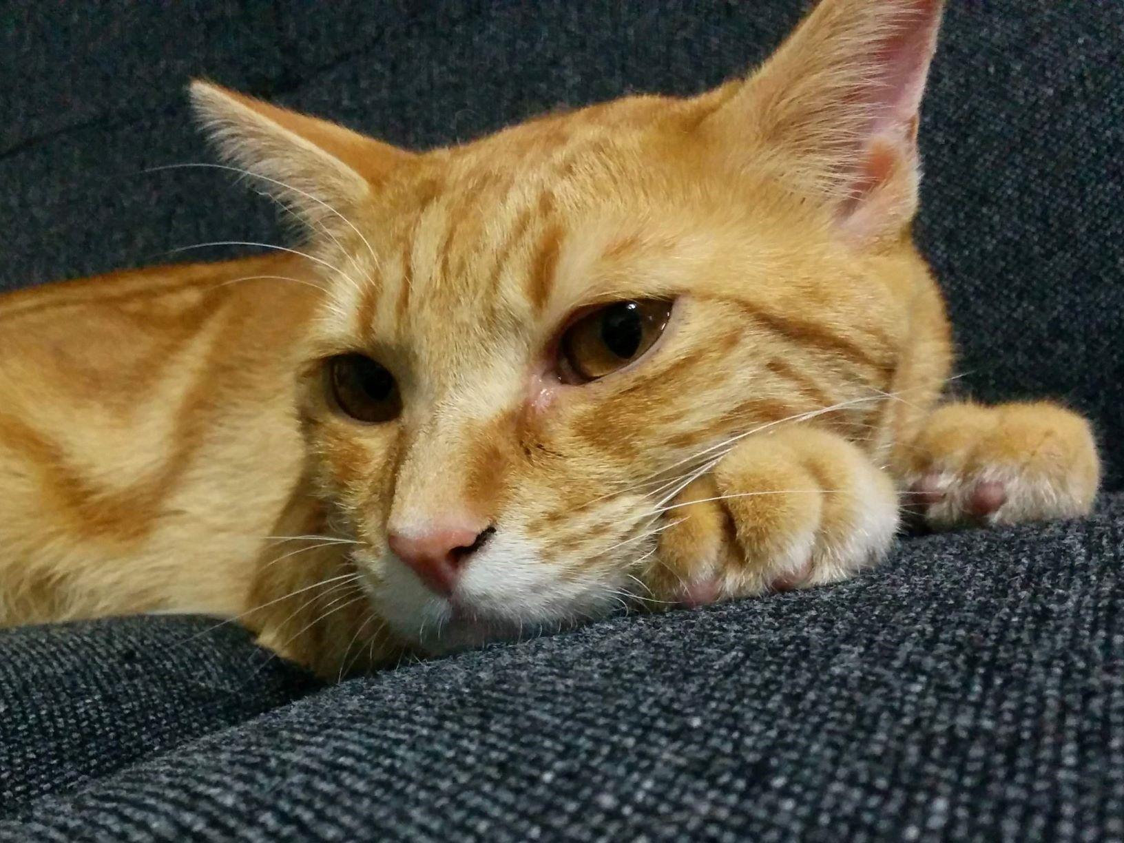 猫がトイレ以外でオシッコする理由って?