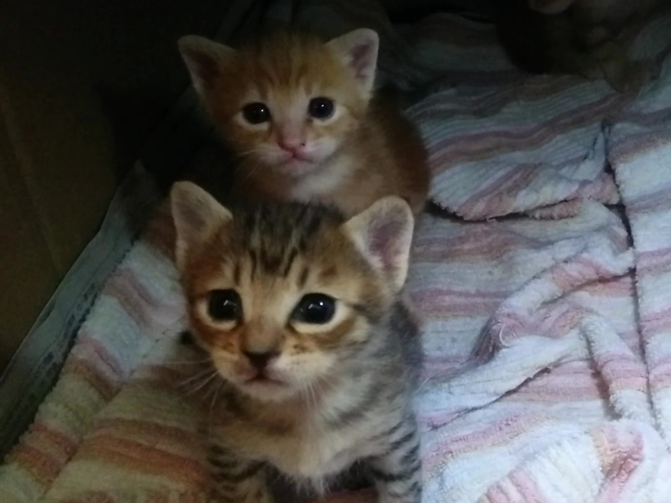 【動画】兄弟猫のなごみ映像セレクション