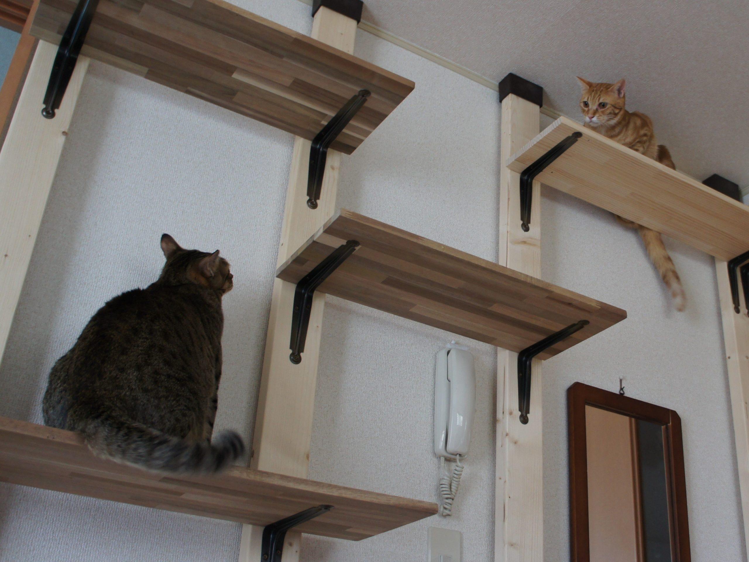 アパートで猫と暮らすのに1階を選ぶ理由