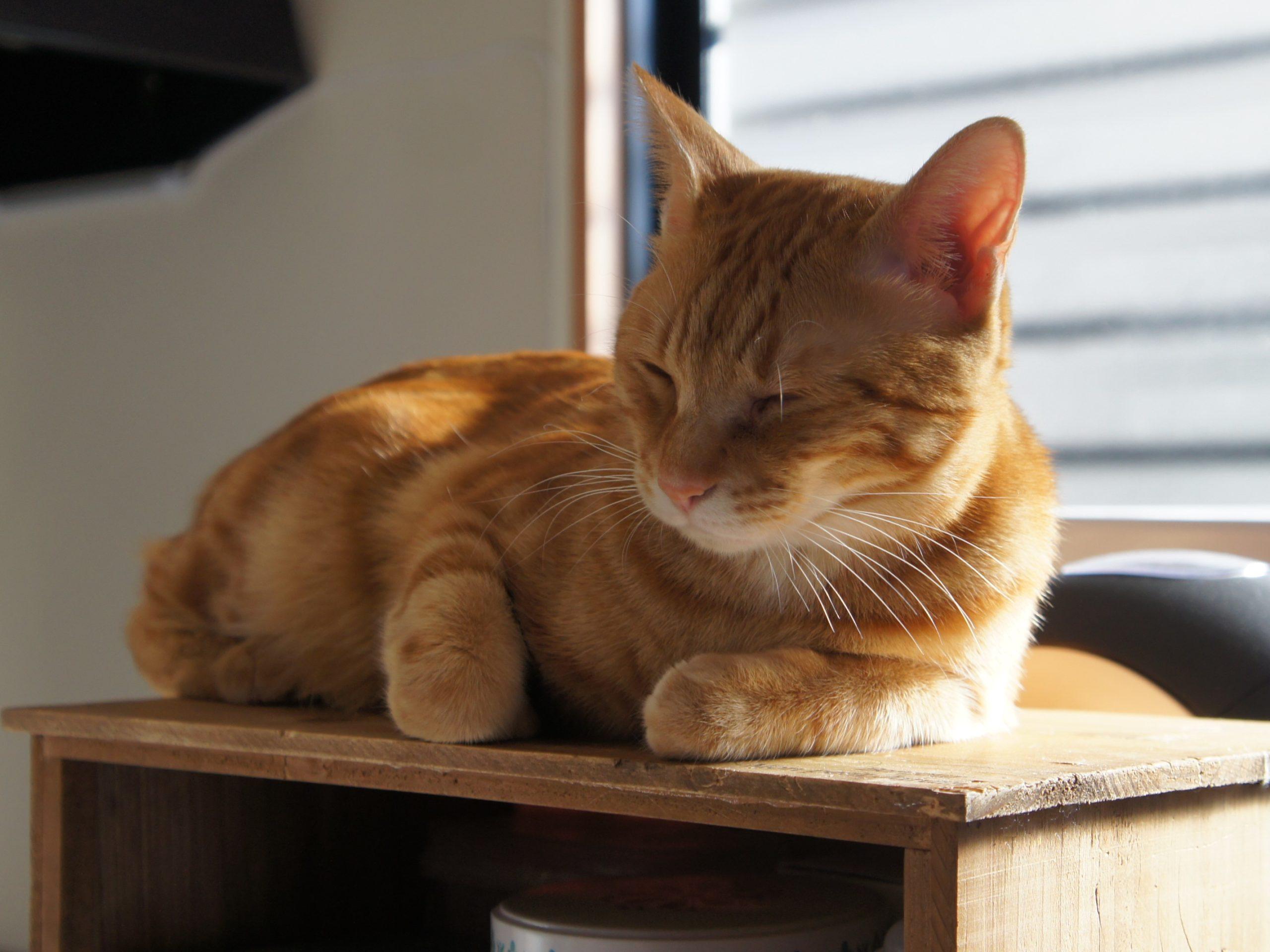 猫がモノを落とすのは