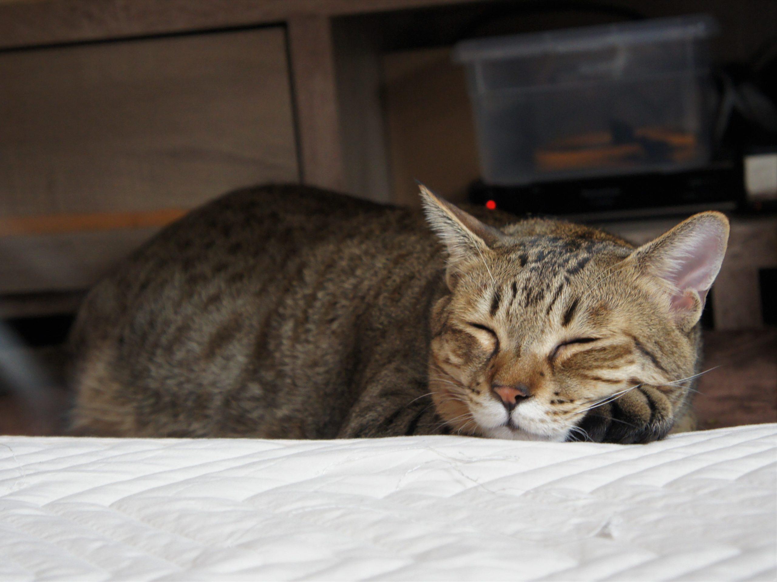 猫とインフルエンザ