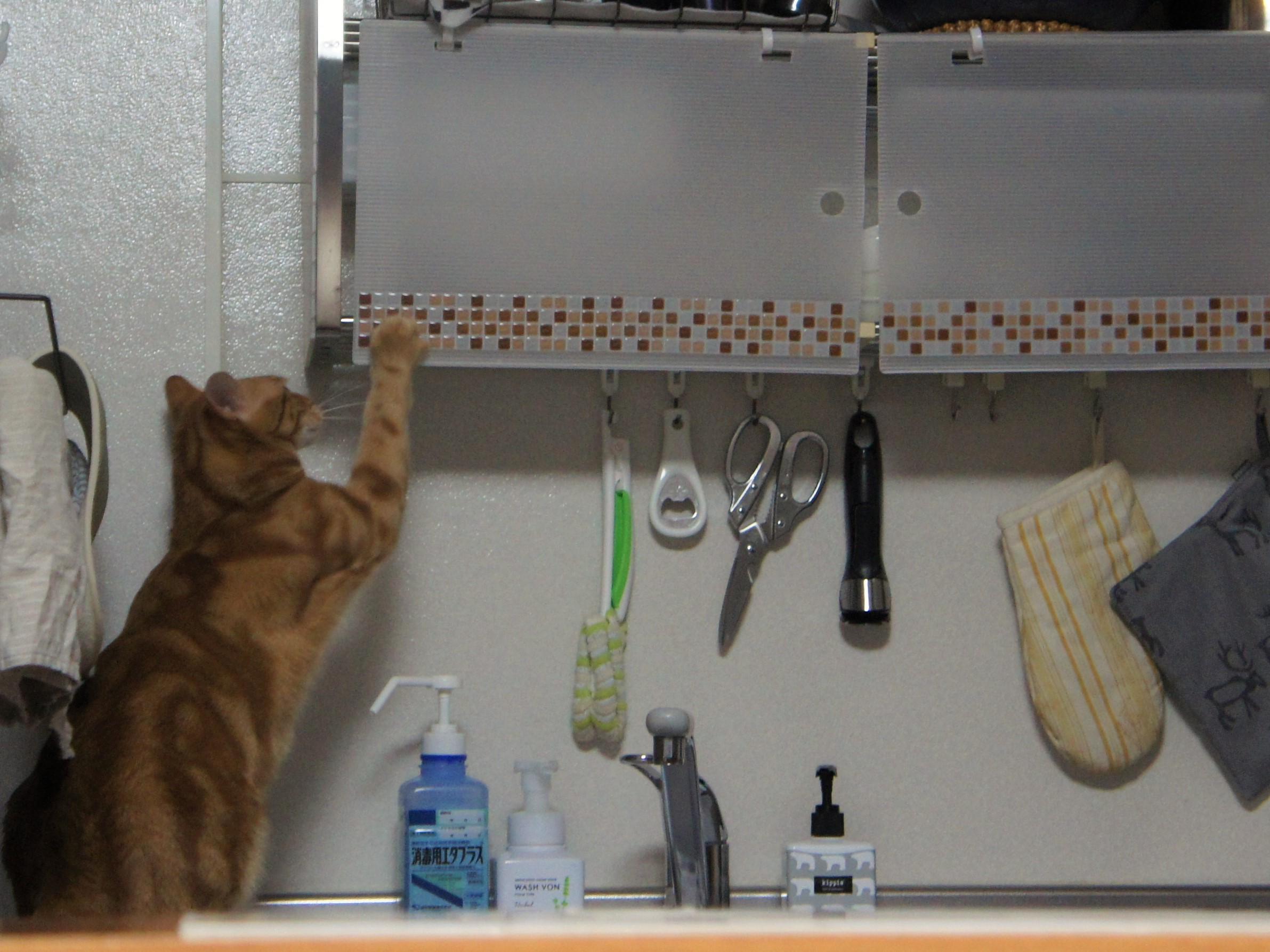 猫のいたずら防止策~キッチン吊棚~