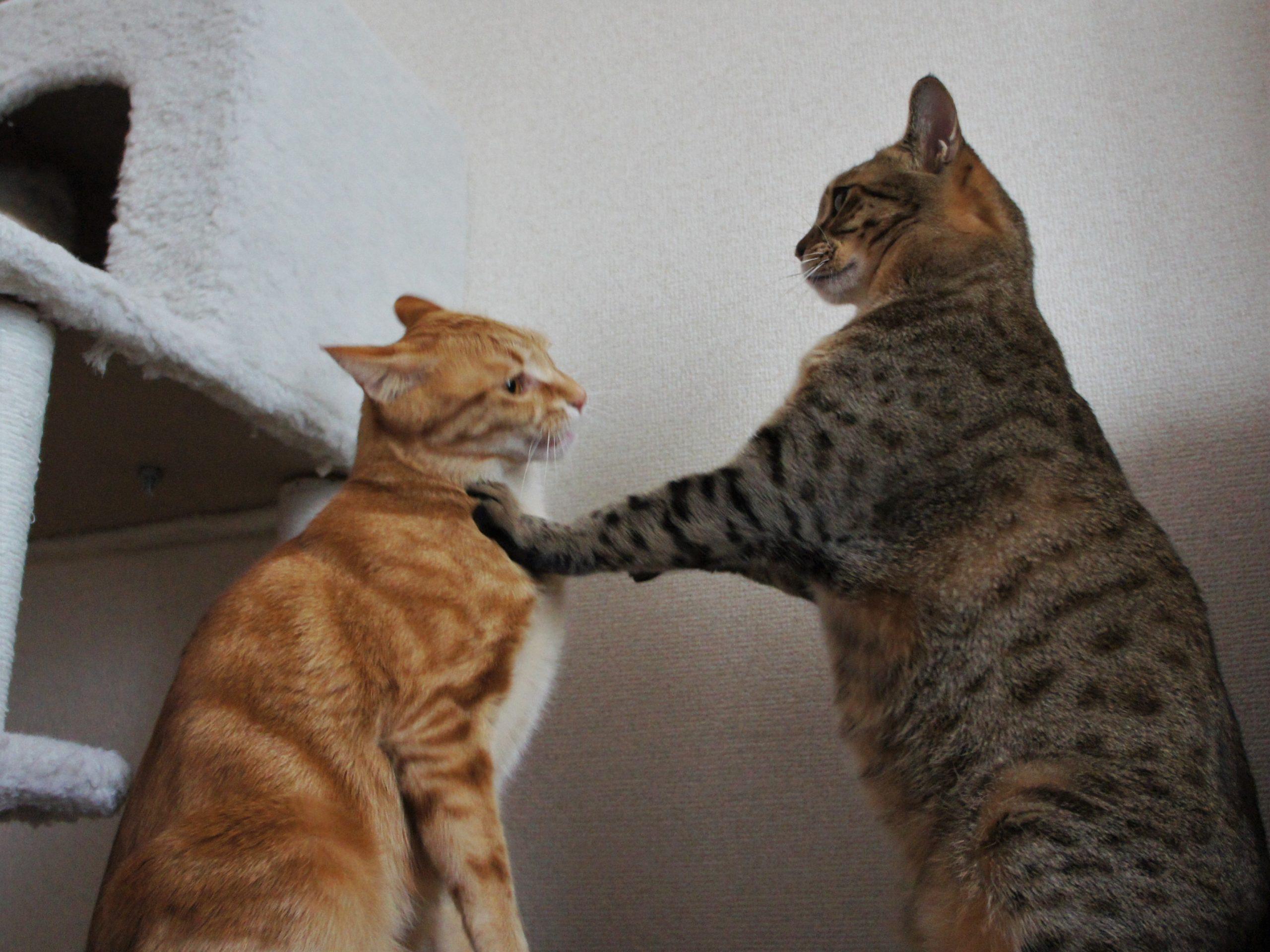 猫が猫の首を噛むのはなぜ