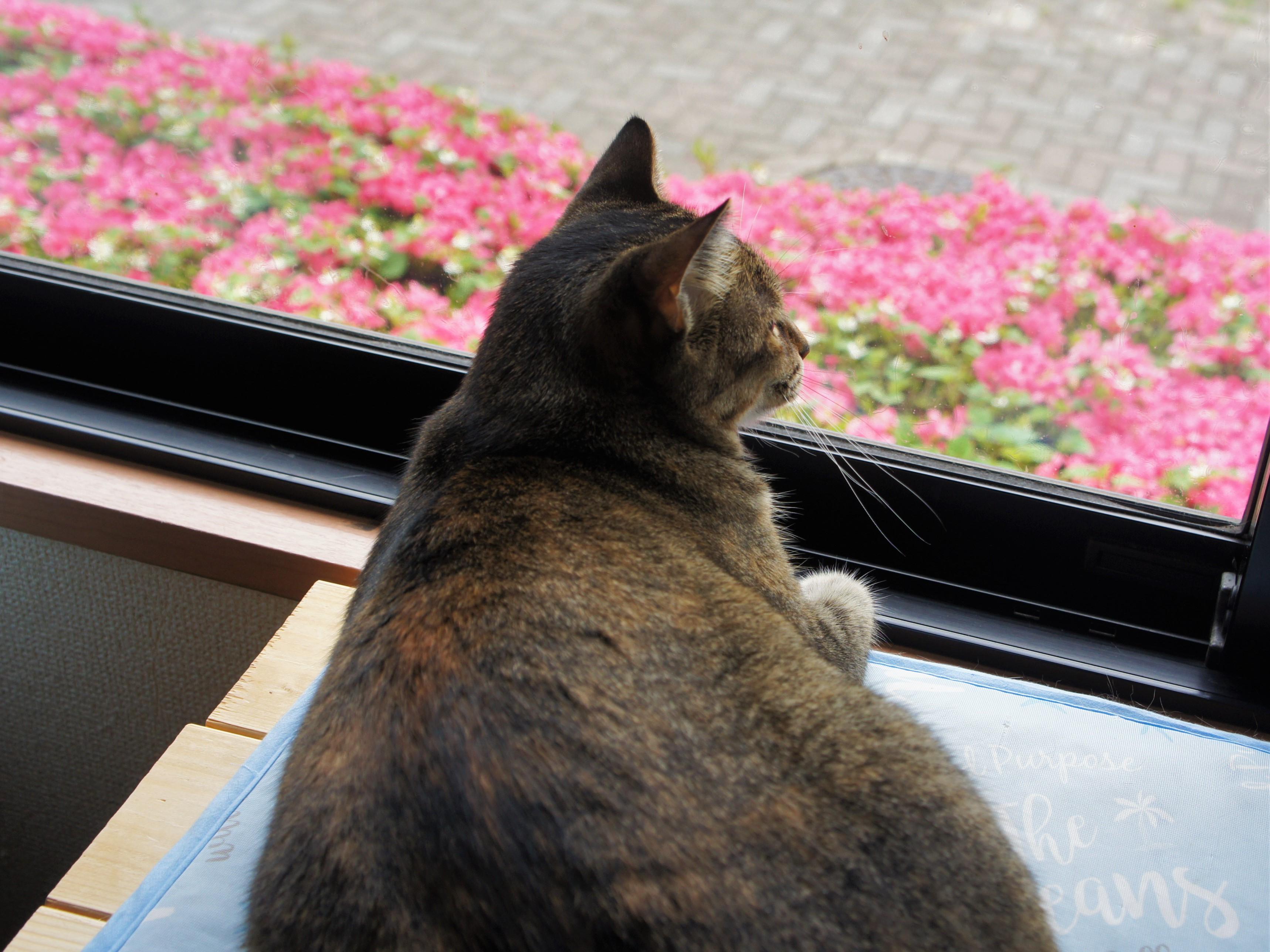 外で猫に出会ったら