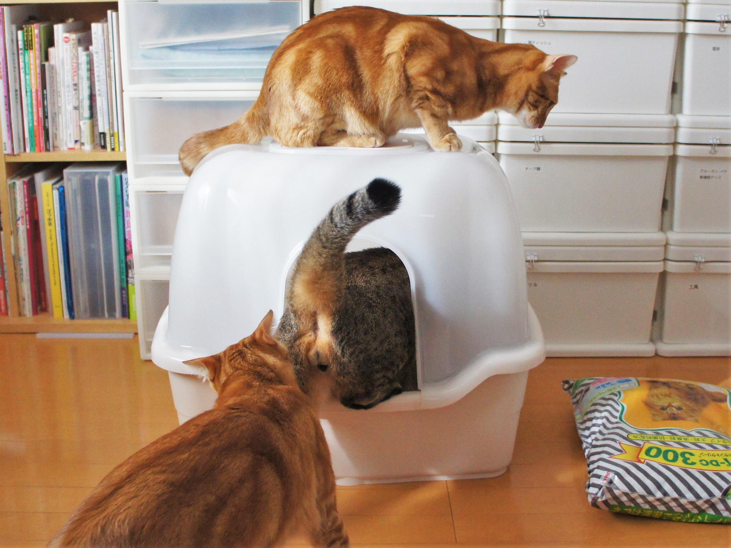 新しいトイレは大人気