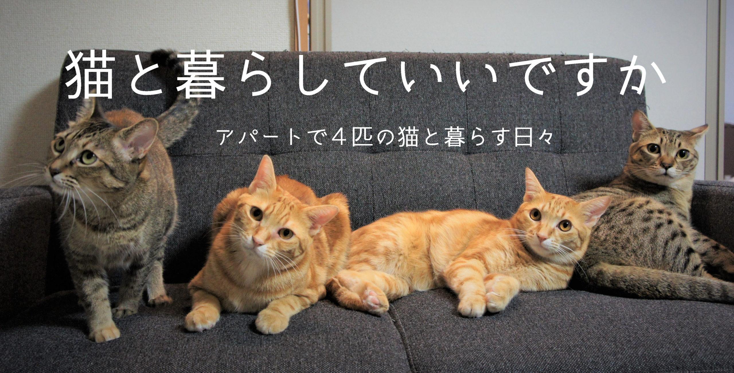 猫と暮らしていいですか