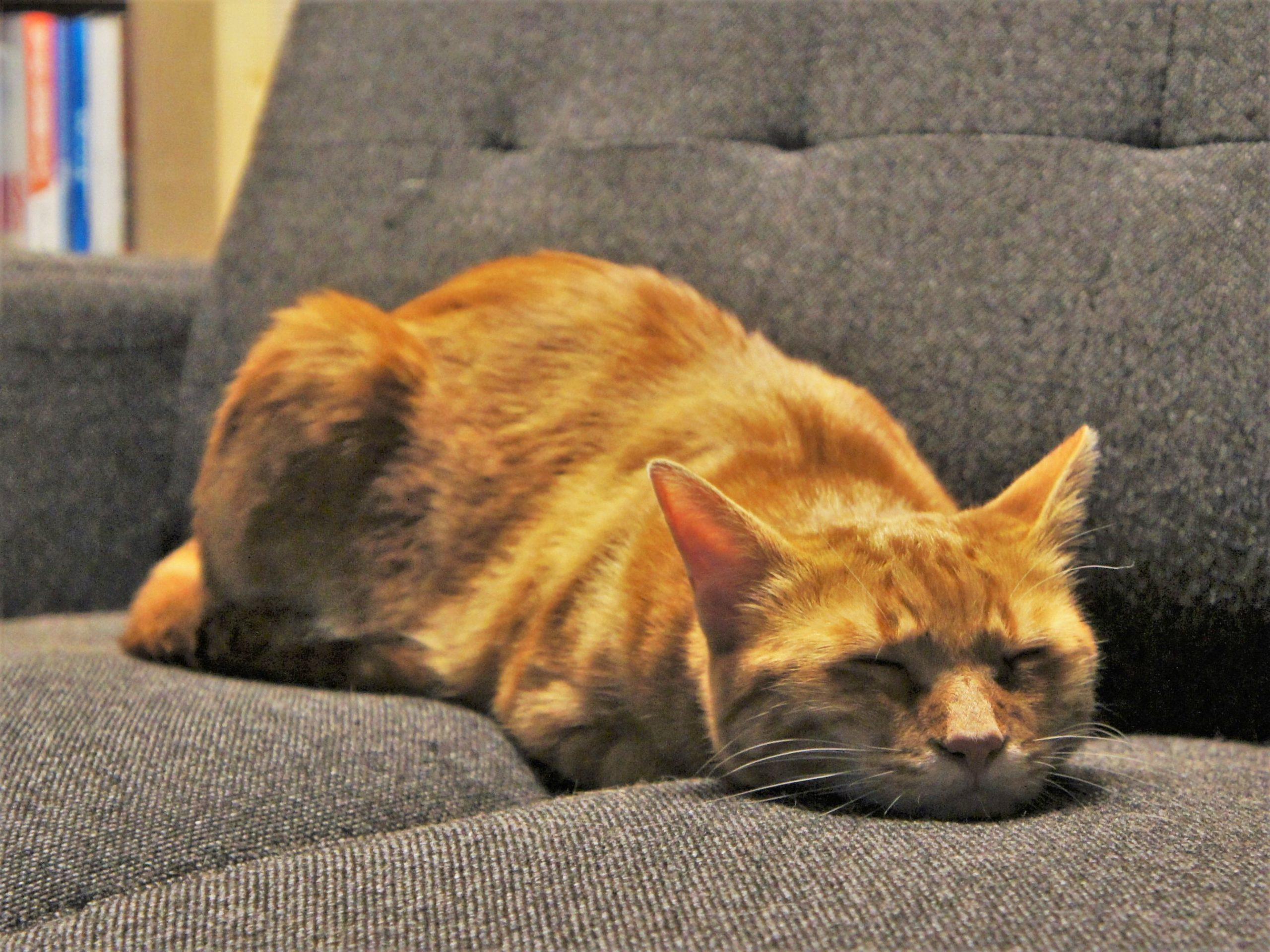 猫も夢を見る?(後編)