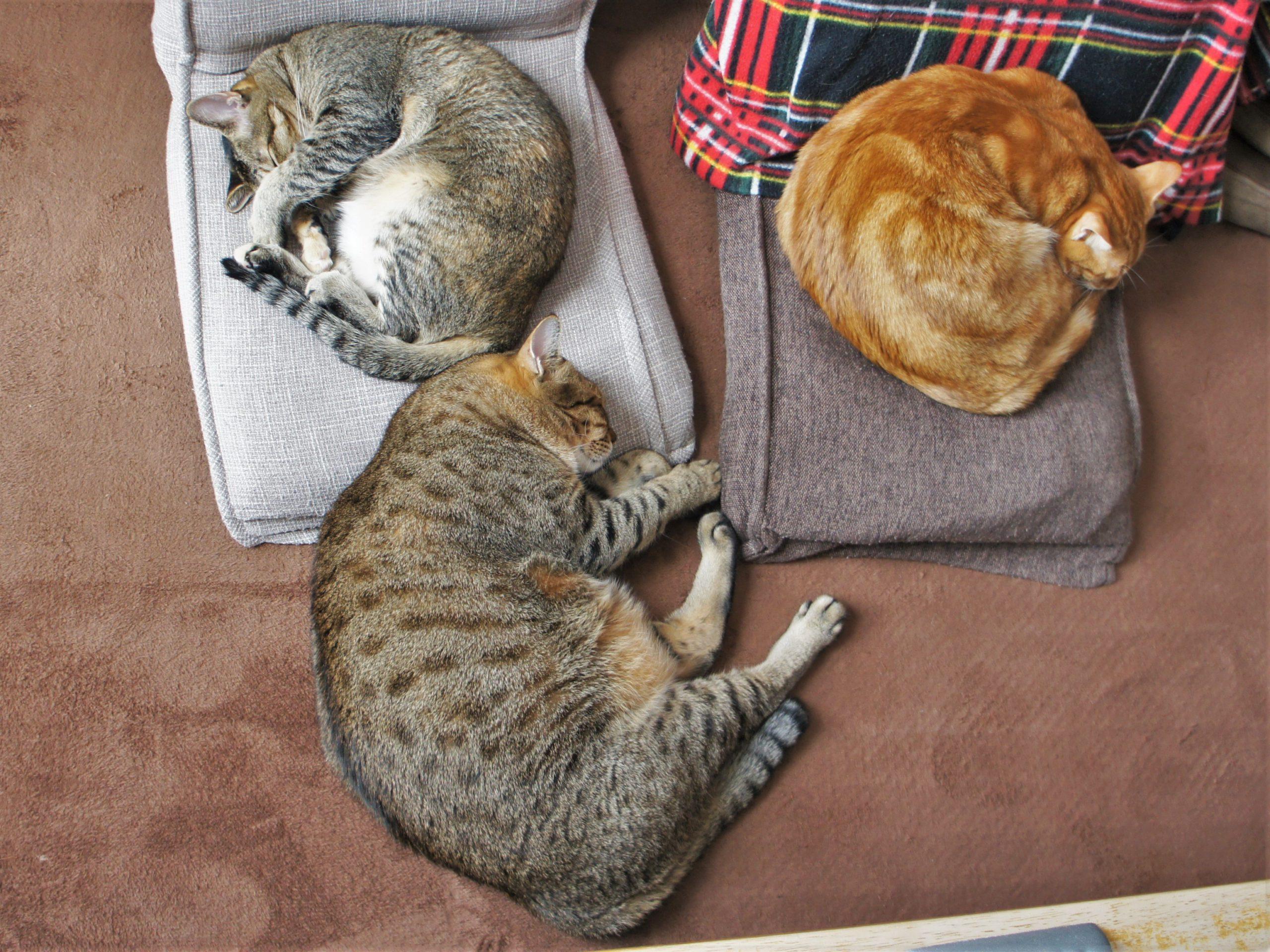 猫も夢を見る?(前編)