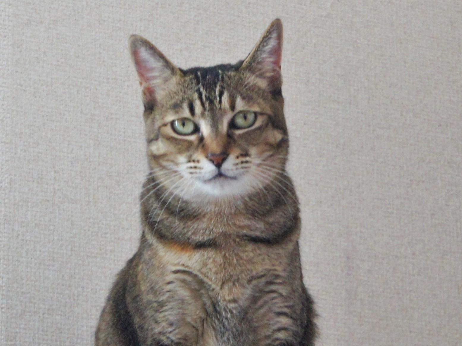 猫のいたずら防止策・わが家の実例集