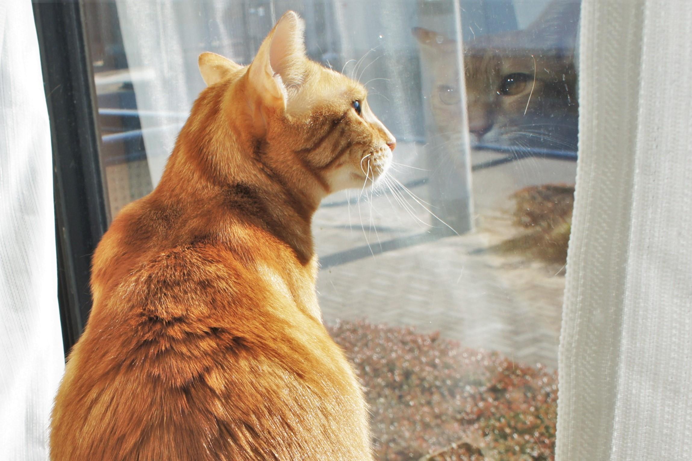 猫トイレの砂ぼこり対策に『トイレ専用空気清浄機』