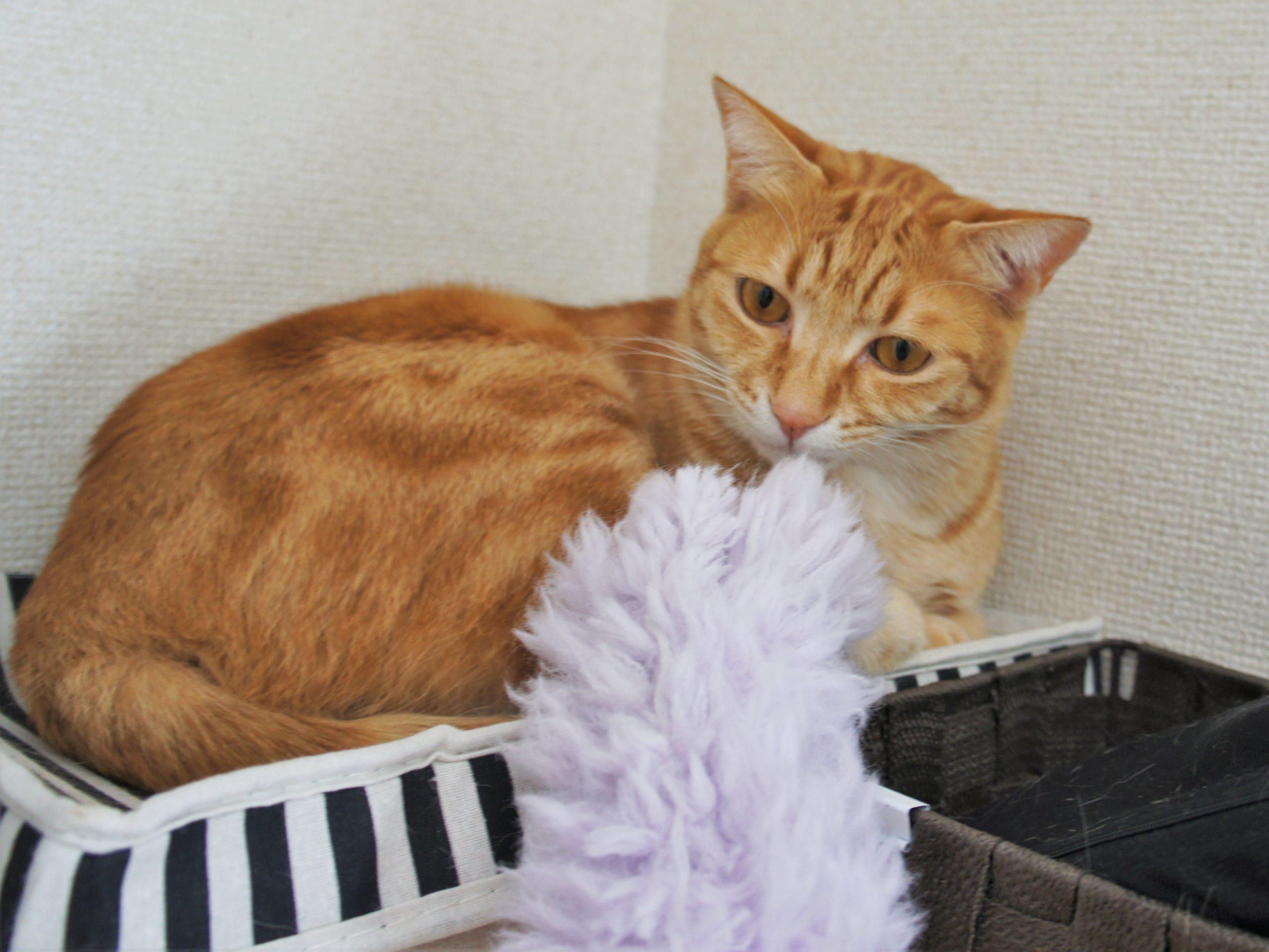 お掃除シートとハンディモップ、猫のいる家での効果的な使い方