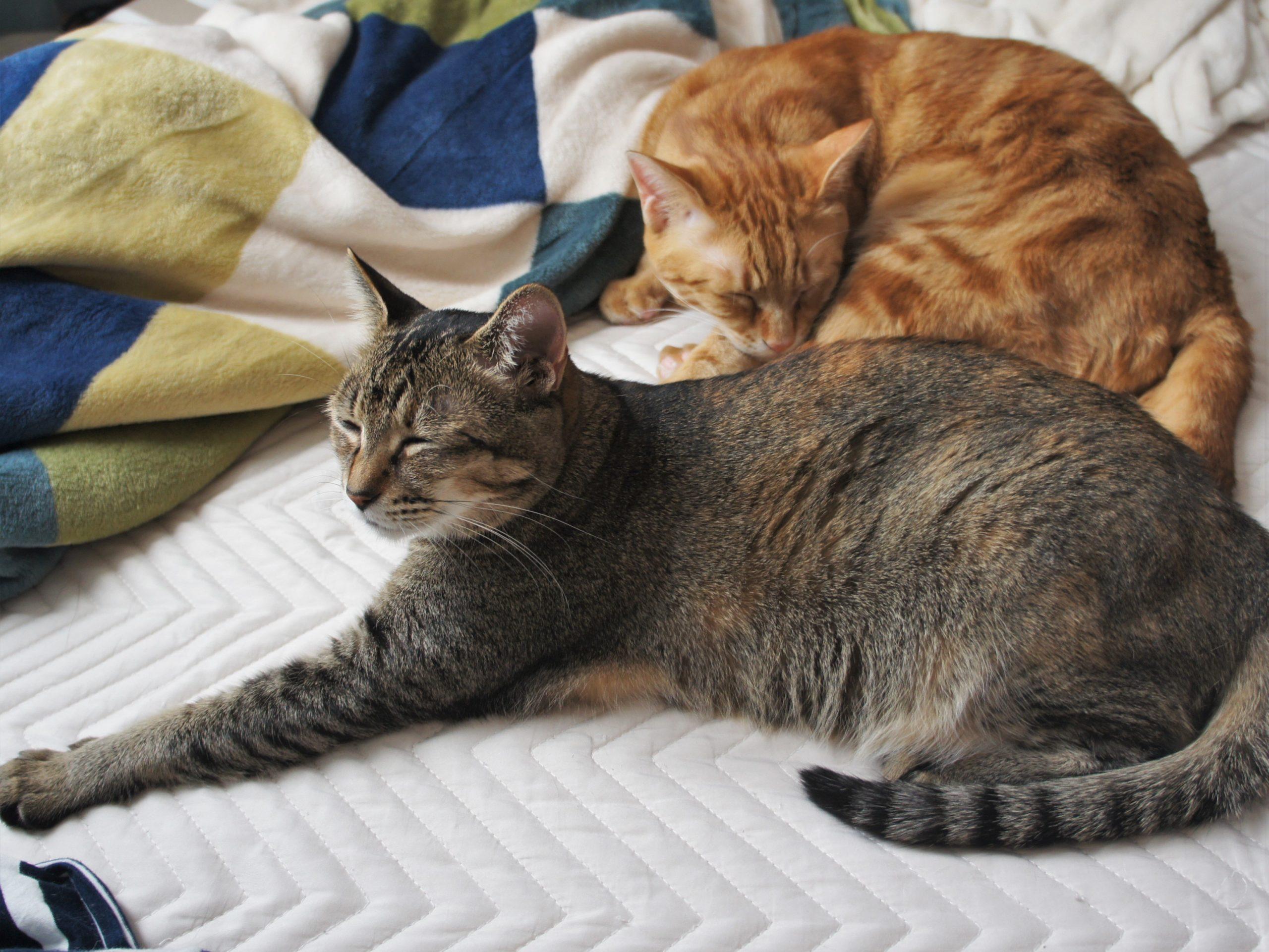 保護猫の未来のために参加しよう『とろねこチャレンジ』