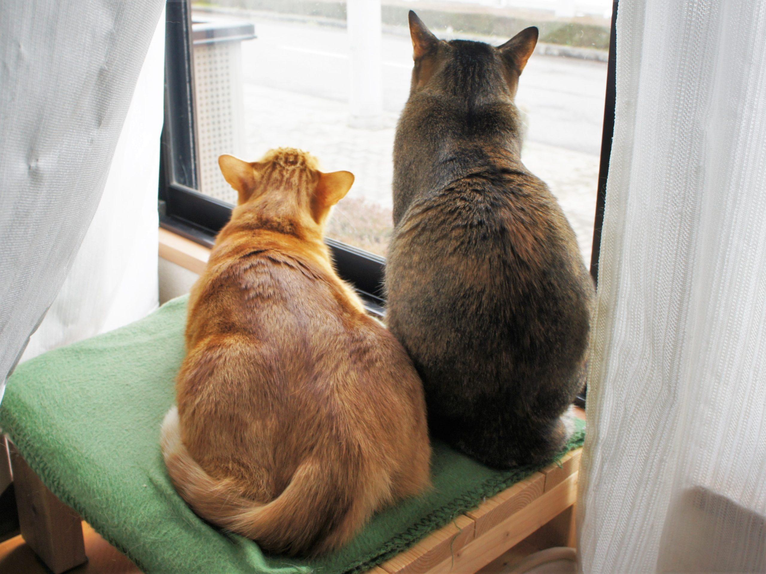 猫とコロナウイルス