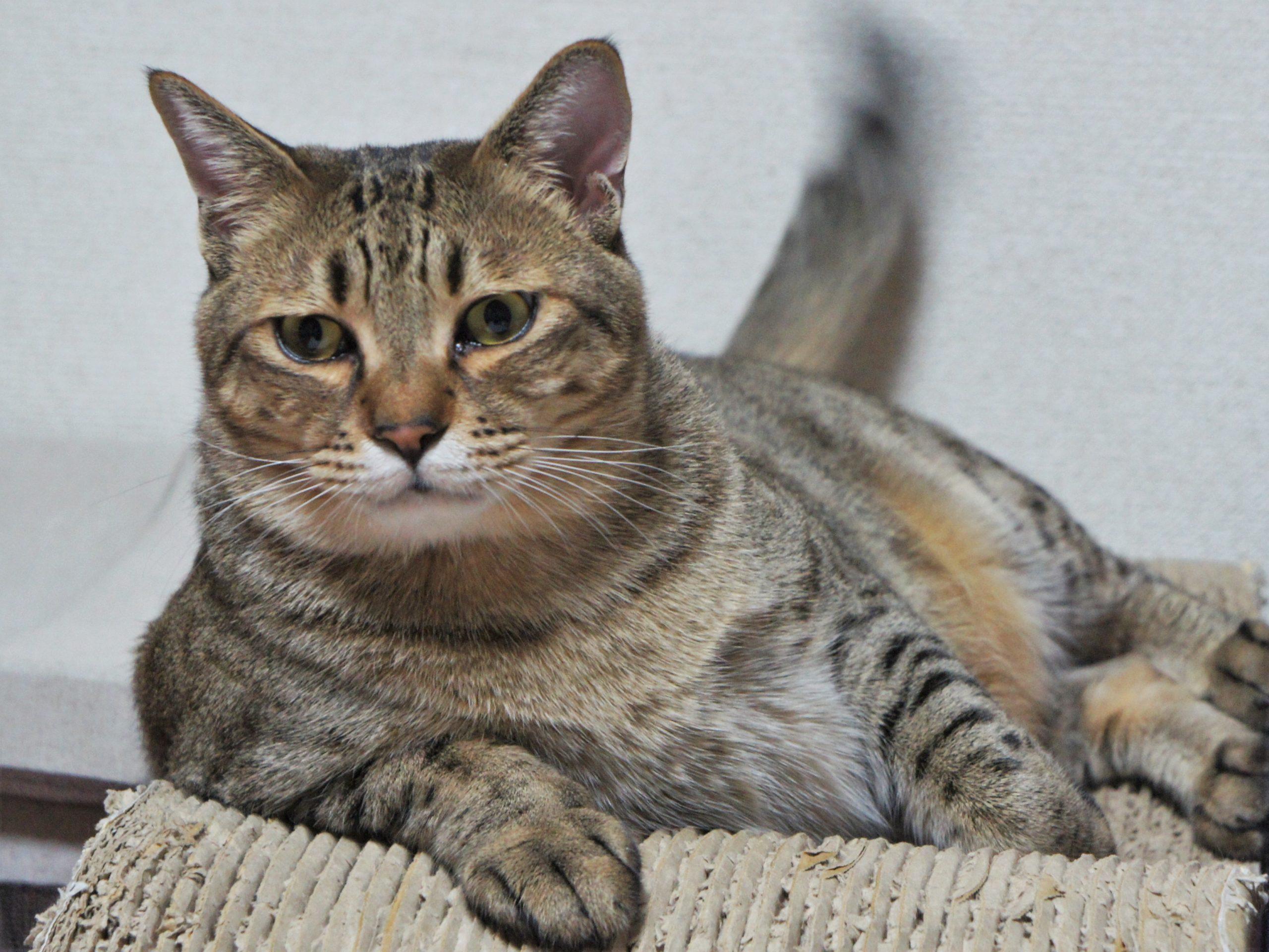高級猫砂『セリーム バイオサンド』のその後
