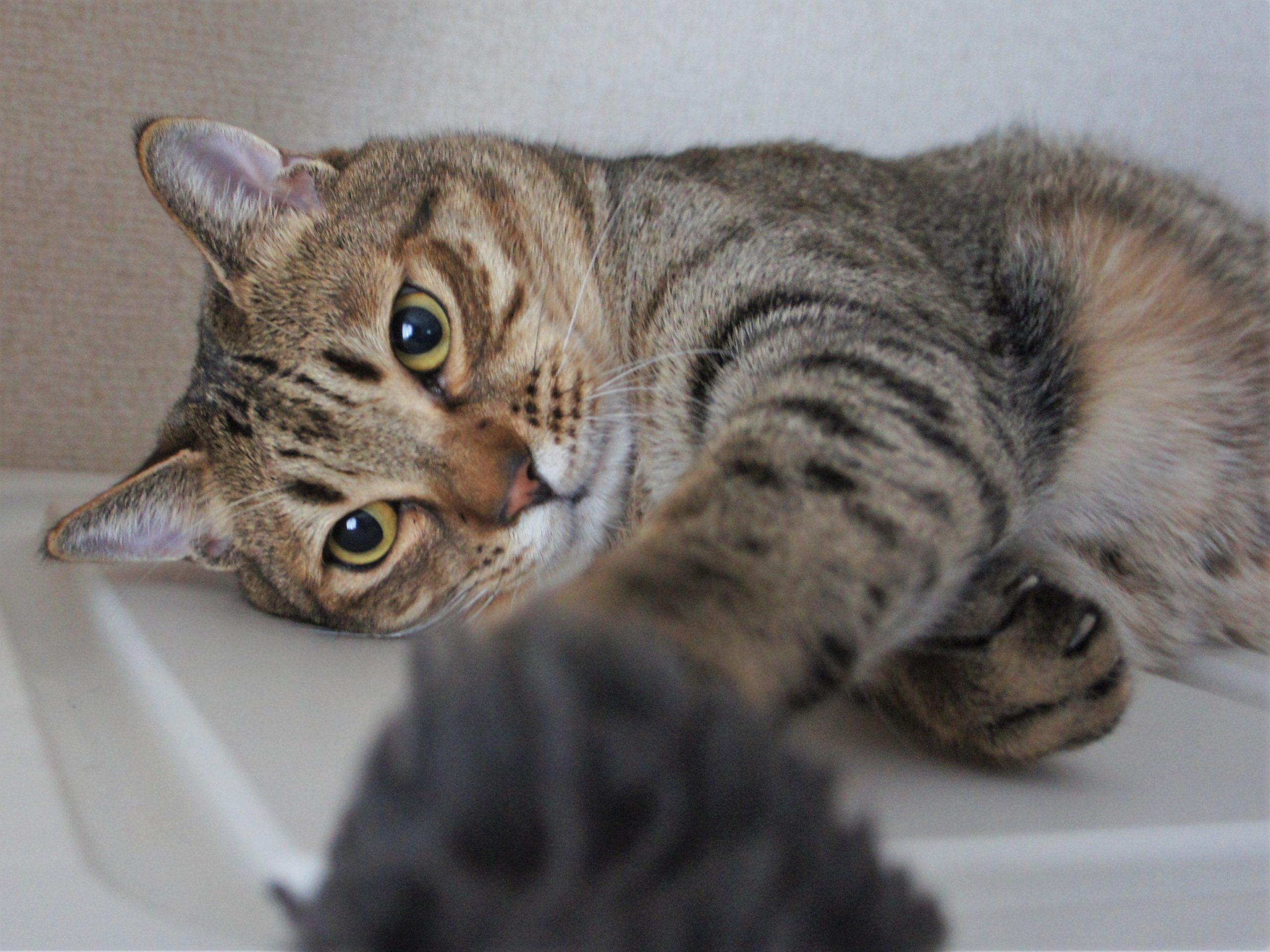 猫砂を変えて砂ぼこりはどのくらい減った?