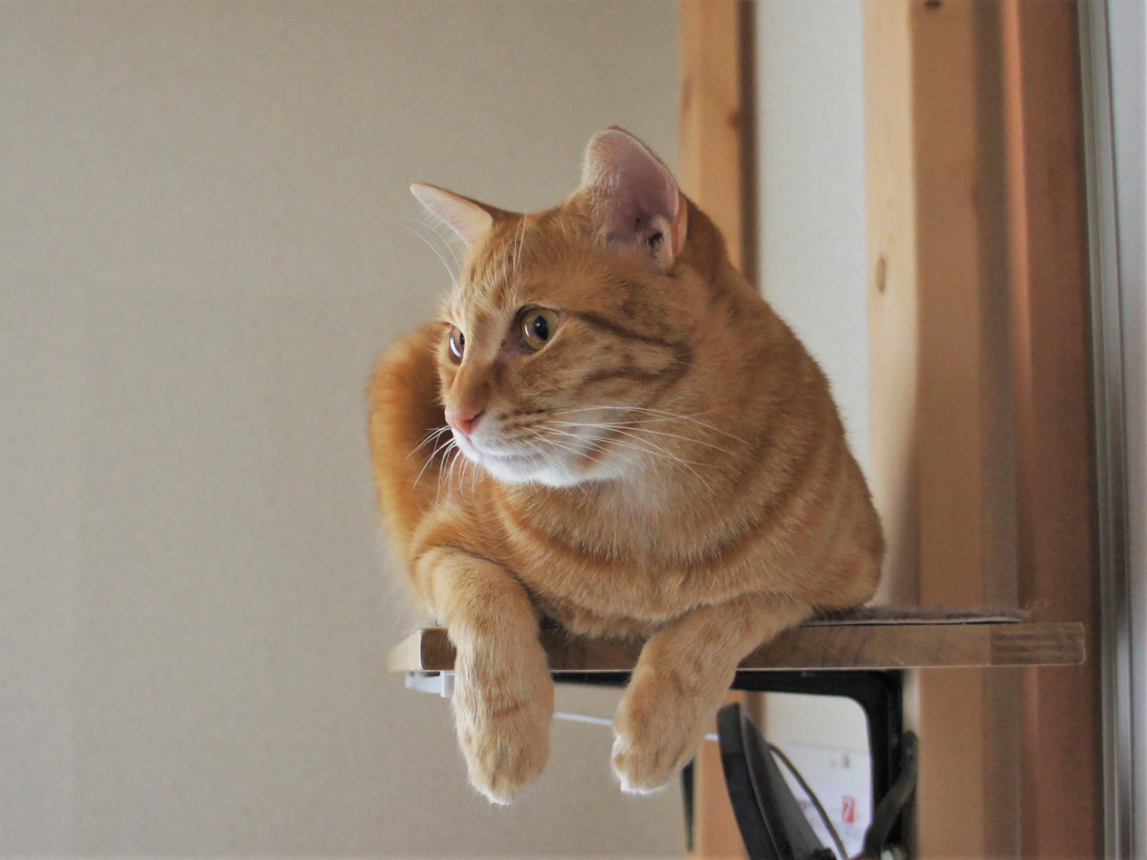 猫の保険を選ぶポイント(後編)