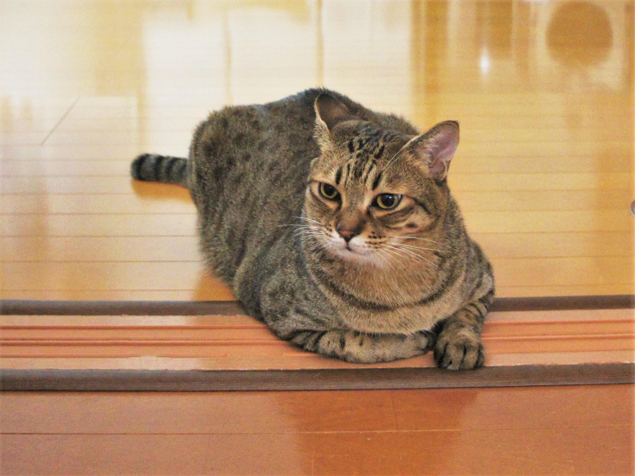 電気ちりとりは猫砂飛び散り対策に有効?