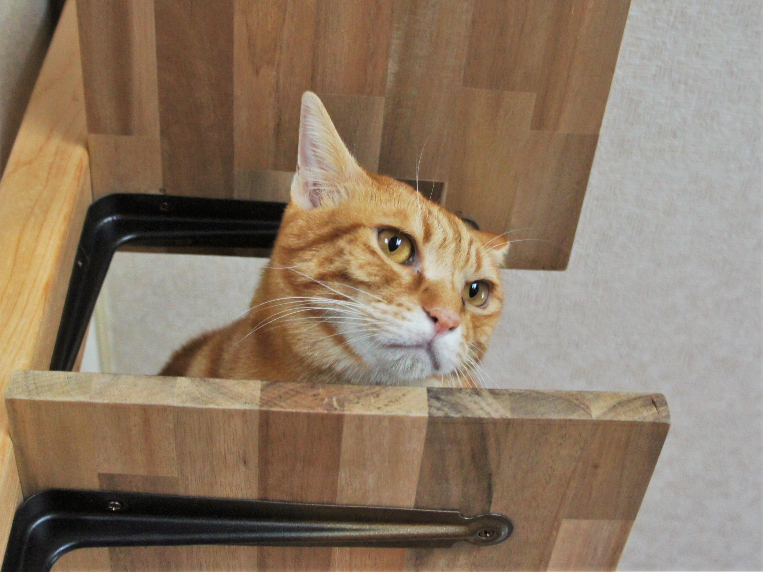猫の問題行動には意味がある