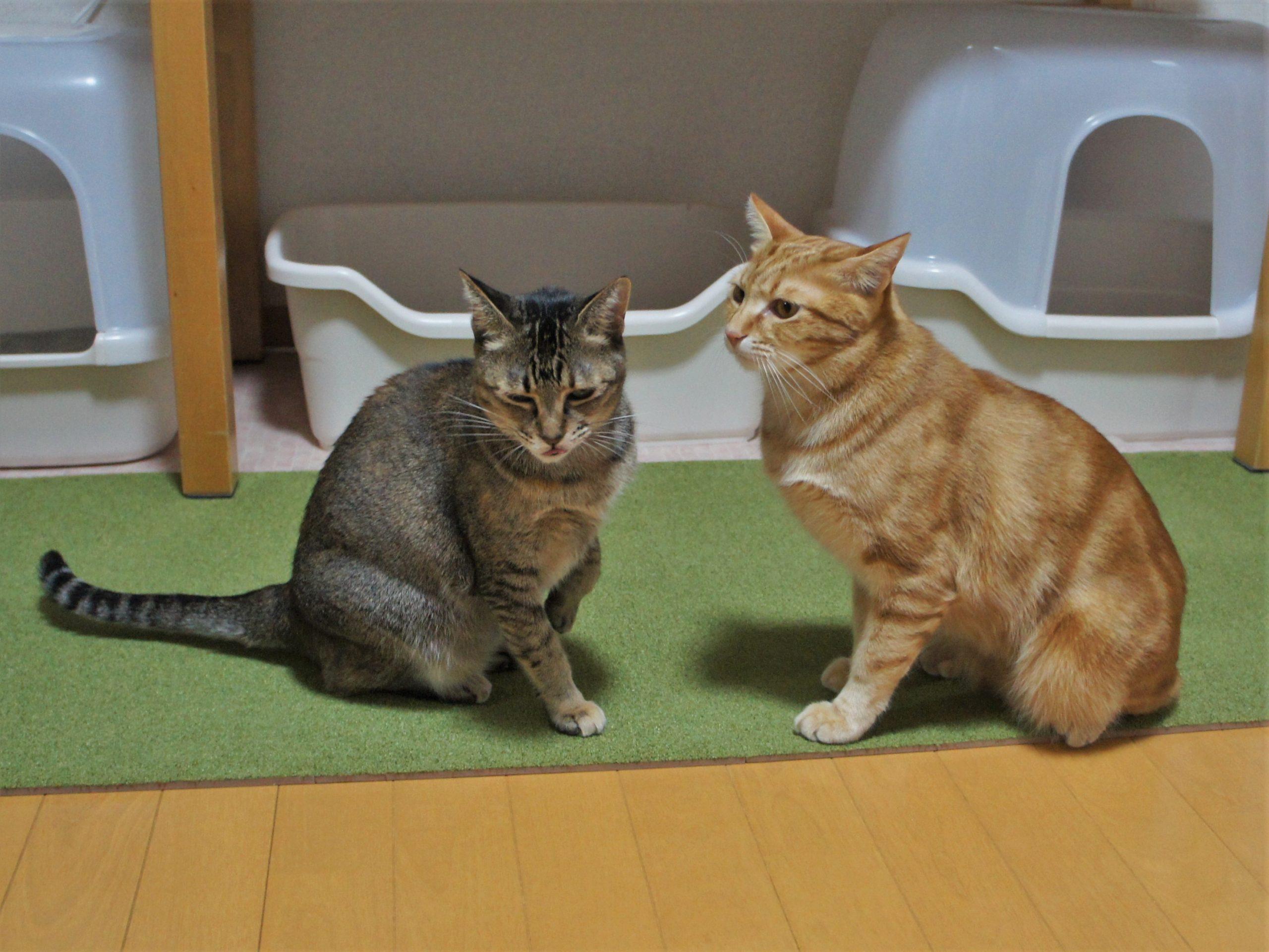 猫トイレにおすすめ『ニトリのマット』