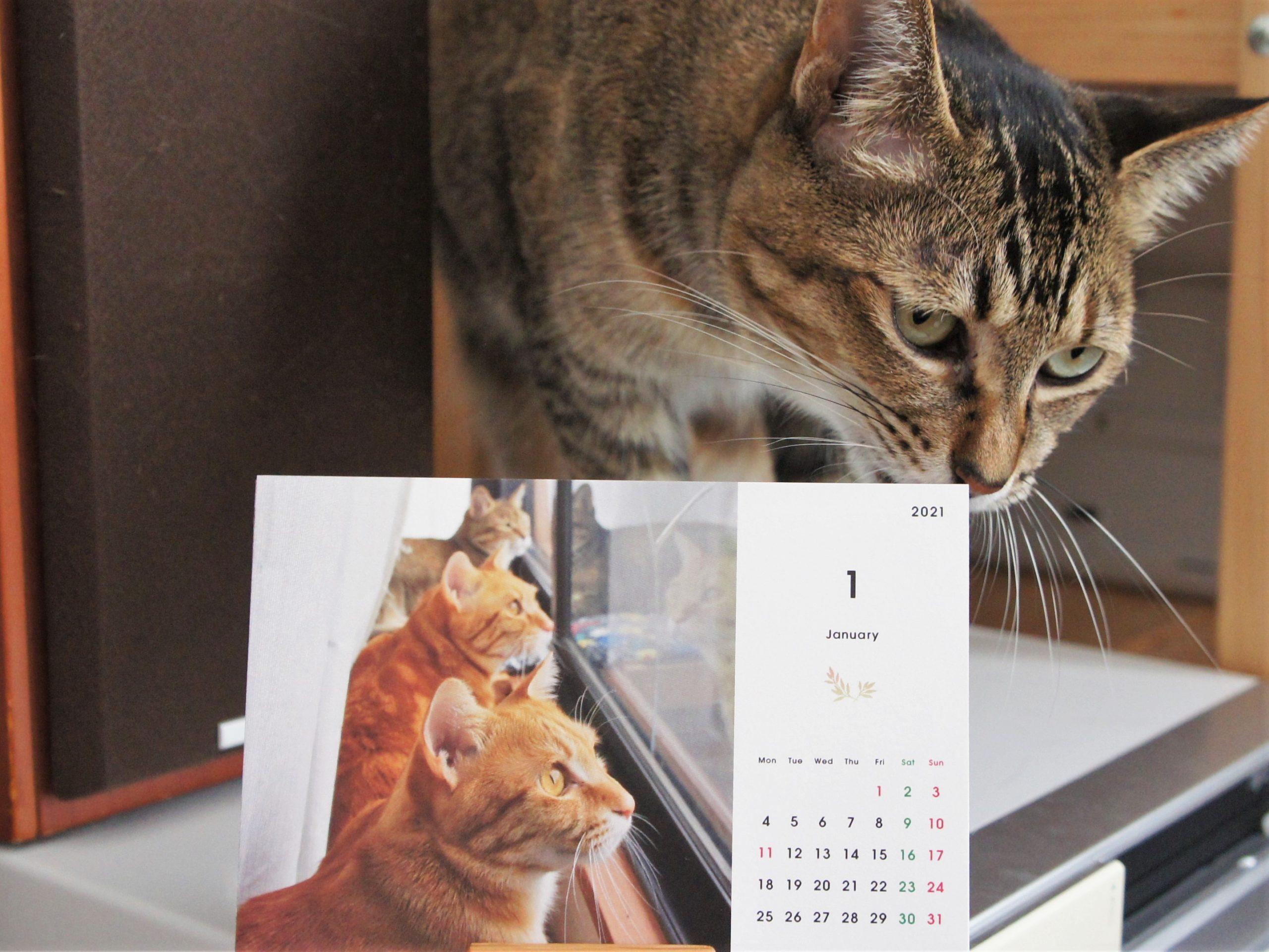 ウチの子カレンダーできました