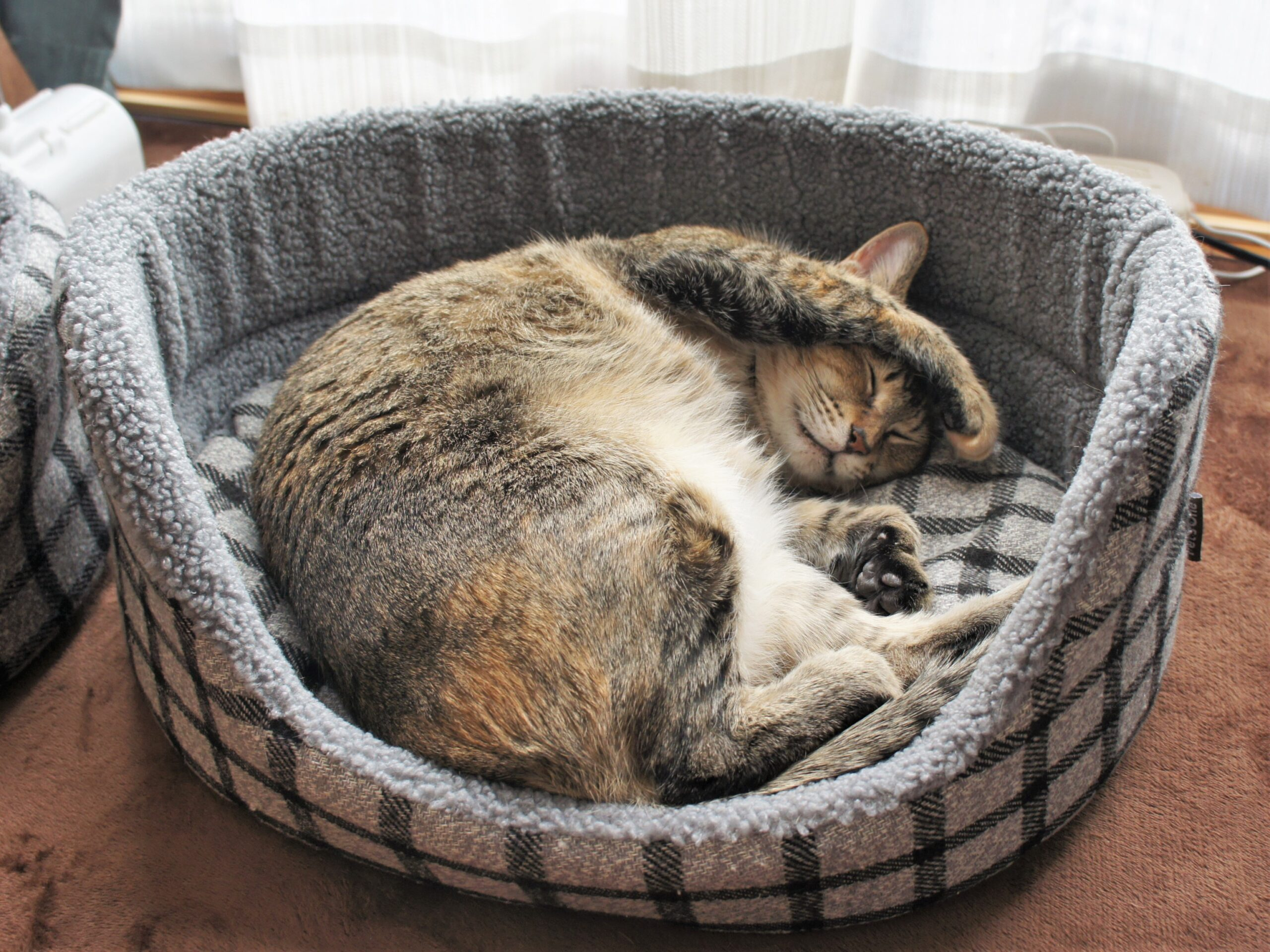 結局猫ベッドが好き