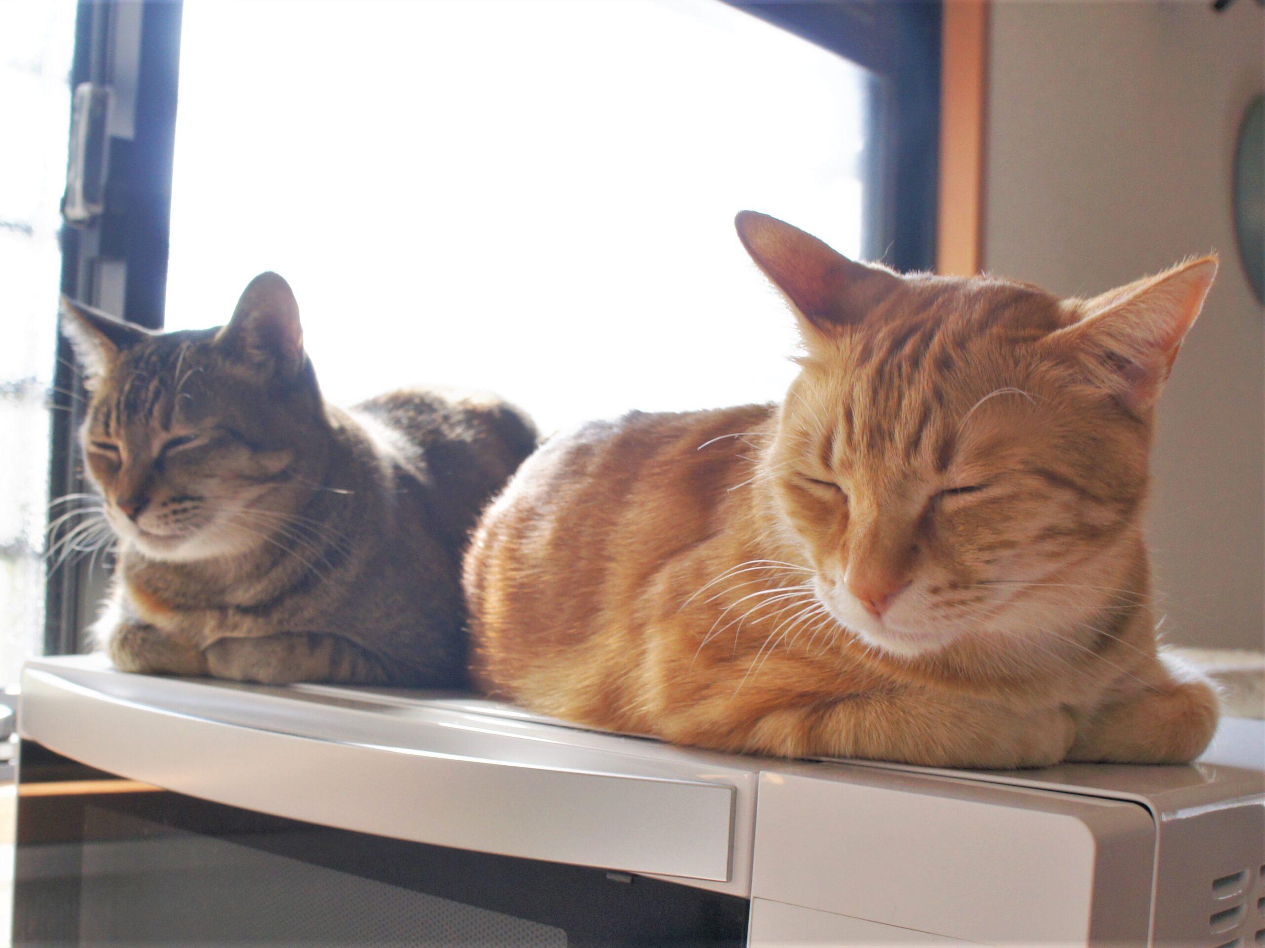 『猫の日』には猫の健康を想う