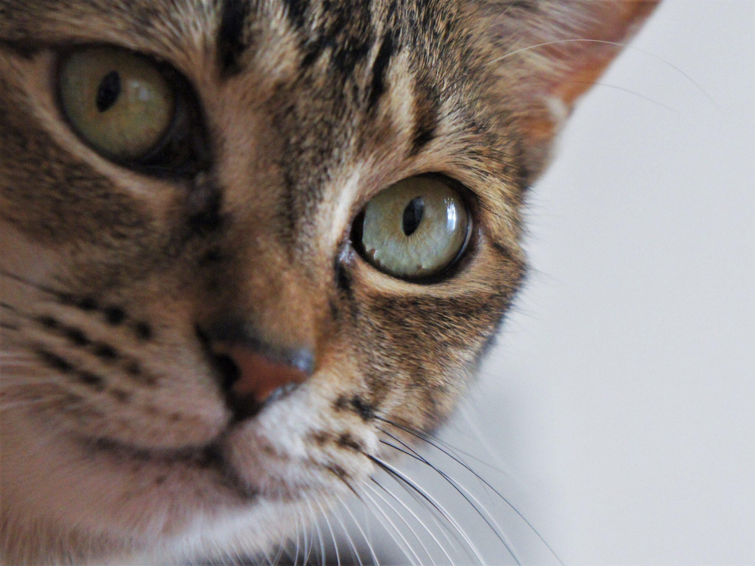 猫の瞳にロックオン!『動物瞳AF』搭載カメラ